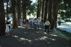 まずは大雄寺の杉並木から。自分の干支のお地蔵さんにごあいさつしながら山門へ。